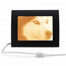 Pets Photo Large Lamp