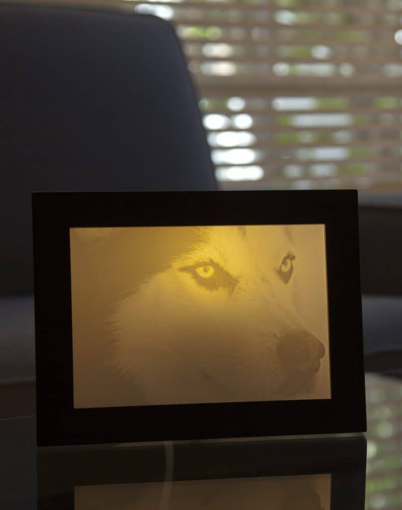 Dog photo lamp gift