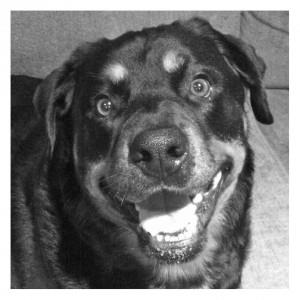 Photo of Dog that passed away